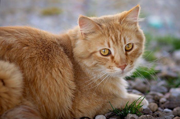 Không nên tặng thú nuôi có lông cho người già tránh các bệnh hen suyễn.